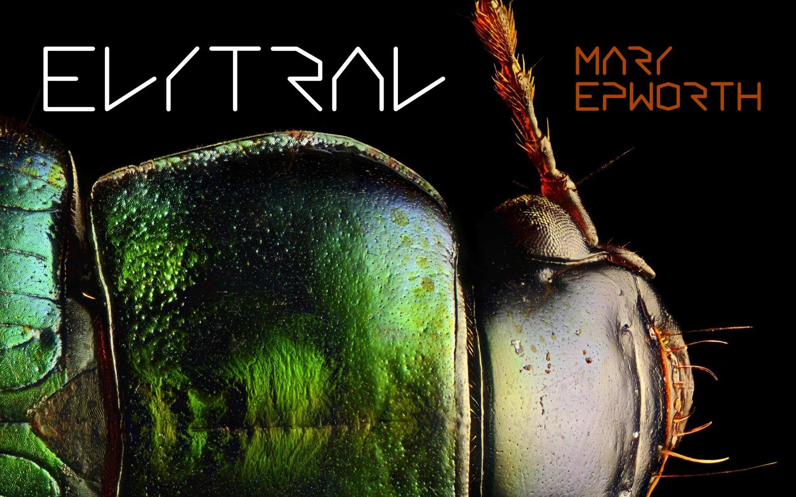 Elytral-packshot